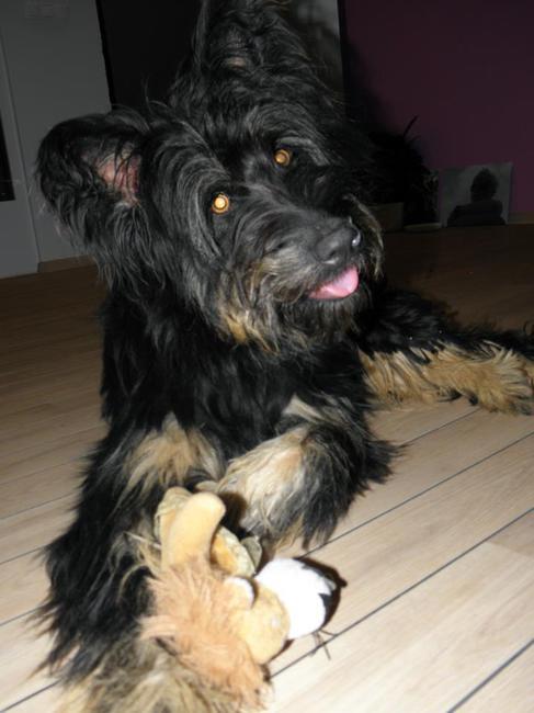 Adoptowana suczka Zola ze schroniska w Koszalinie