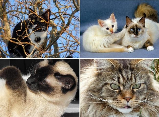 Koty zwierzeta domowe