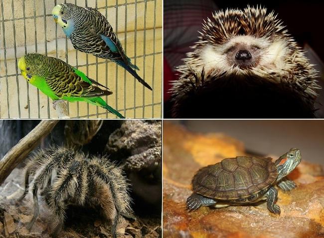 Genialny Koty, rybki, króliki i inne zwierzęta domowe QC75