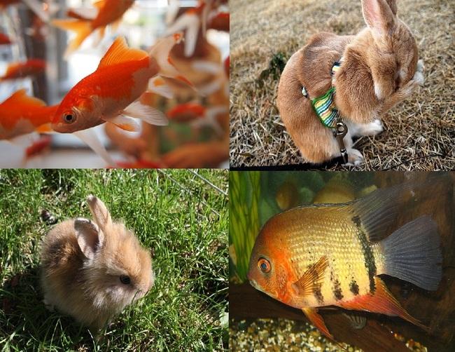 Zwierzeta domowe rybki akwariowe i króliki miniaturki