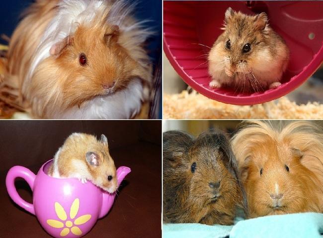 Fantastyczny Koty, rybki, króliki i inne zwierzęta domowe FB36