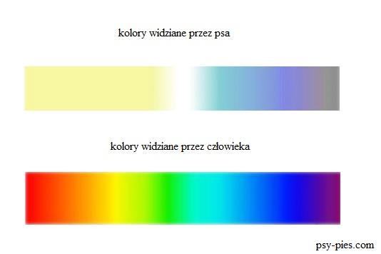 Barwy widziane przez psa i człowieka