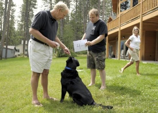 O psach które potrafią liczyć Psi matematyk labrador Beau