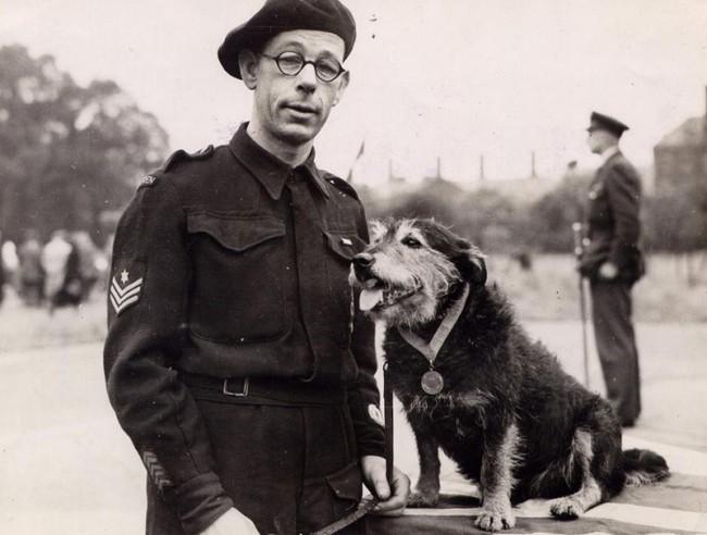 Bohetrski pies RIP odznaczony medalem Dickina