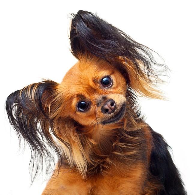Modish Jak fotografować psy? YH74