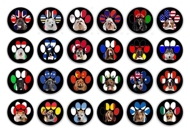 Jak szczeka pies w róznych językach?