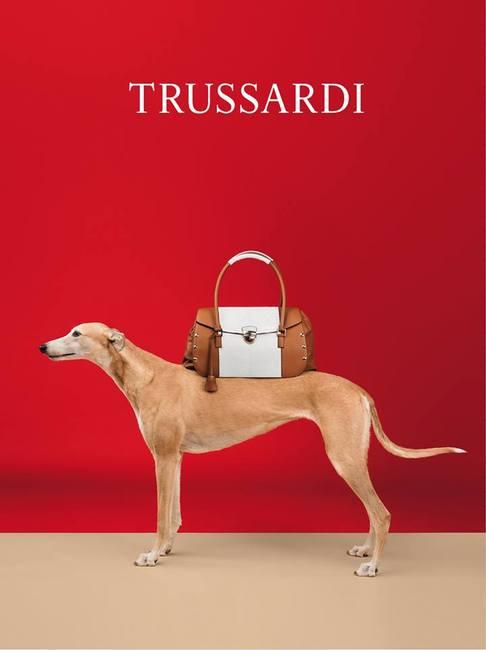 greyhoundy biorące udział w kampanii Trussardii