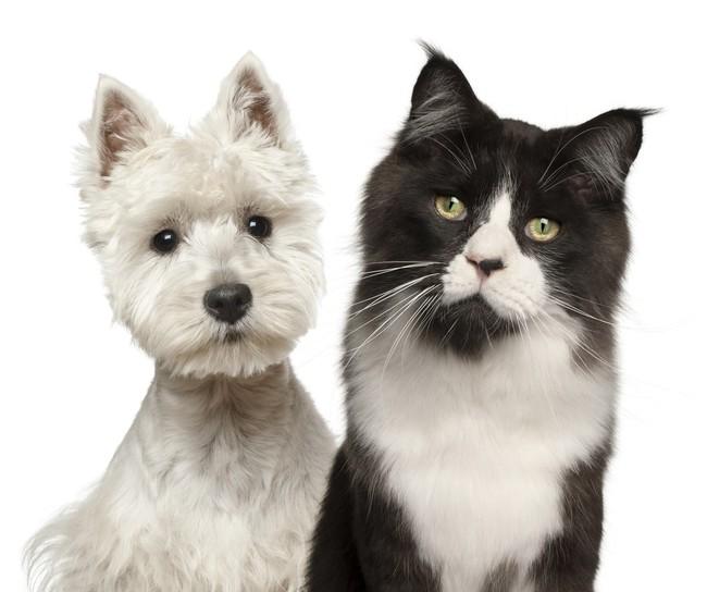 Czy psy są lepsze od kotów?