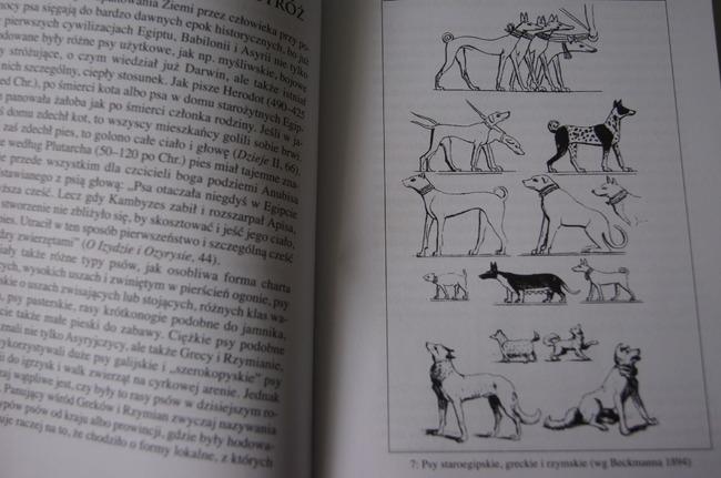Człowiek i pies historia przyjaźni opis książki