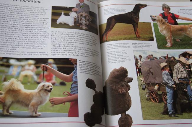 psy wystawowe z ksiązki Psy świata