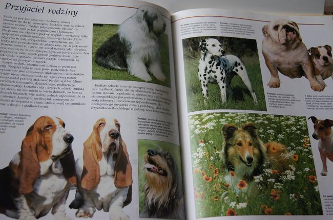 Książka Psy świat psów w 200 kolorowych fotografiach