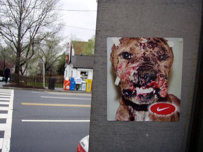 Tak wygląda pies po walce psów