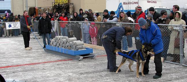 próba uciągu psów zaprzęgowych