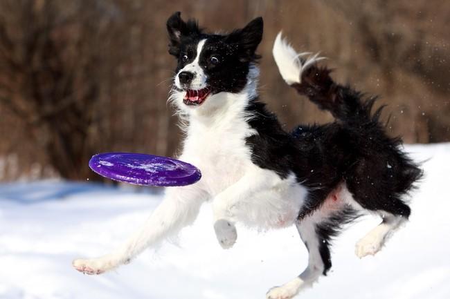 Super zdjęcie psa i talerza