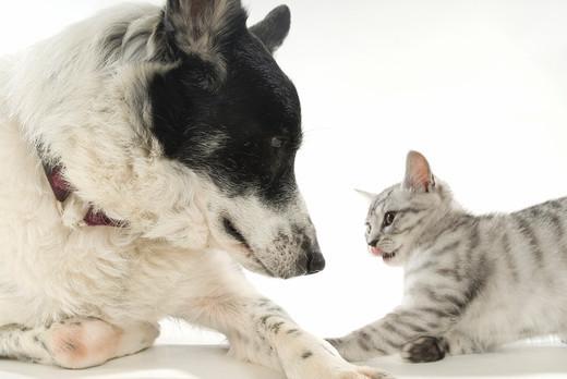 Porównanie psa i kota