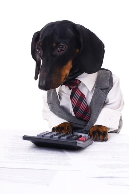Czy istnieje psi biznes