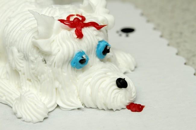Torcik w kształcie białego psa Maltańczyka