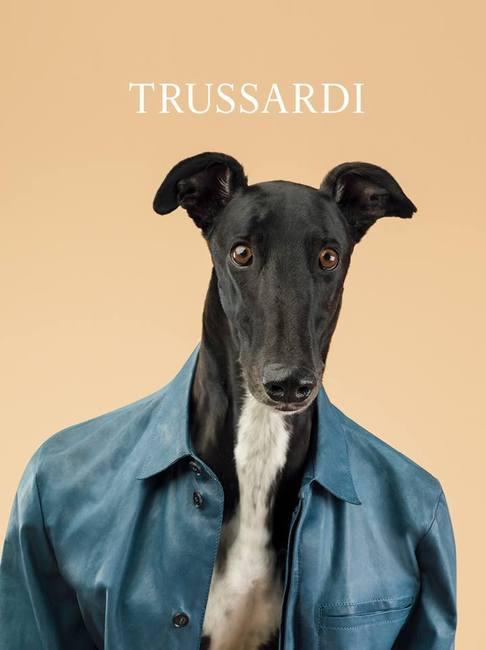 Sesja Trussardii z udziałem psów