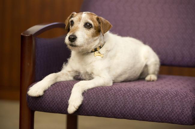 Słynny pies Uggie z filmu Artysta