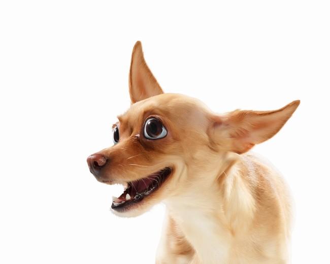 czy pies moze sie smiac