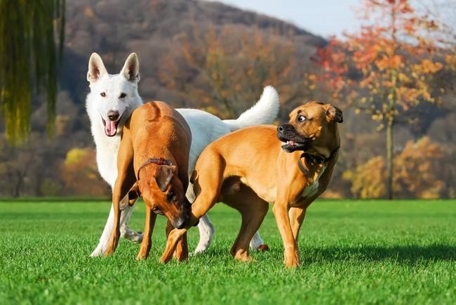 Parki dla psów w Warszawie zabawa psów w jednym z parków
