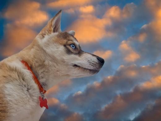 Zdjęcie szczeniak na tle kolorowych chmur