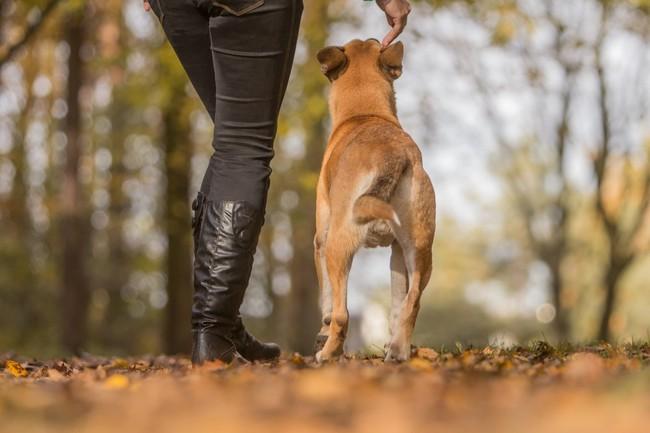 Nauka psa podstawowych komend