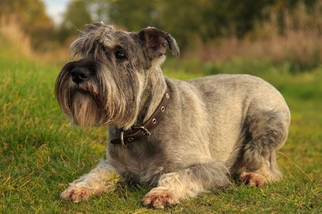 nauka podstawowych komend dla psa