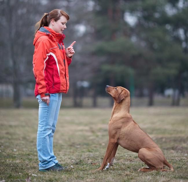 Nauka psa komendy siad w parku