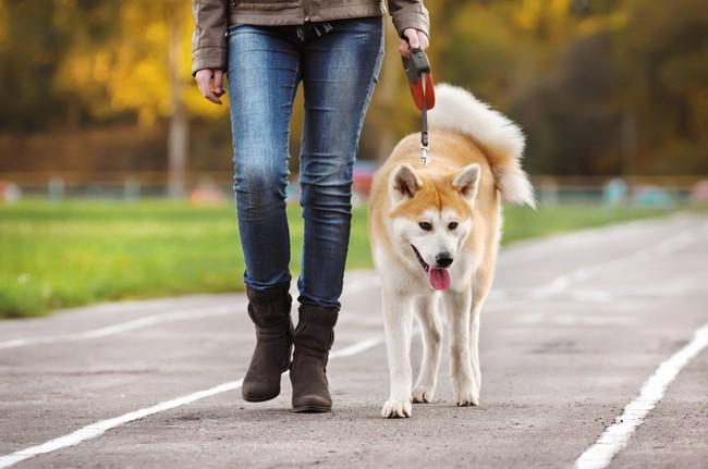 Nauka chodzenia psa przy nodze opiekuna