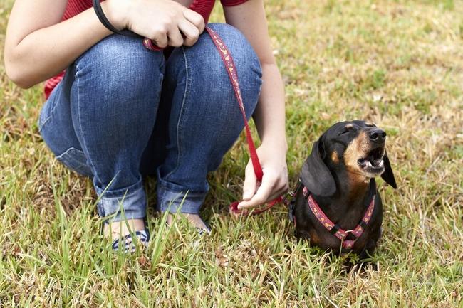 Nauka psa komendy daj głos