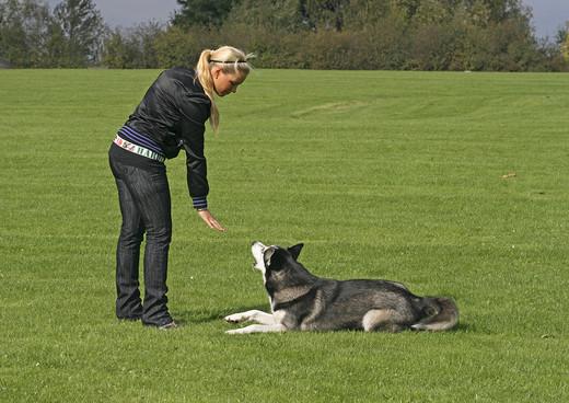 Podstawowe zasady w wychowaniu psa