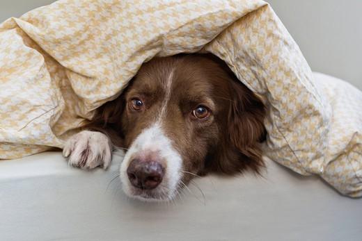 Czy powinniśmy wpuszczać psa do łóżka