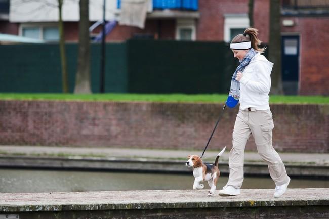pierwszy spacer z psem szczeniakiem