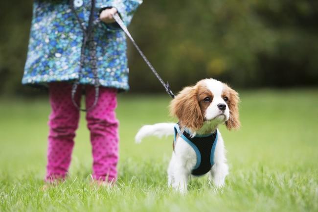 Dziecko trzymające psa Cavaliera