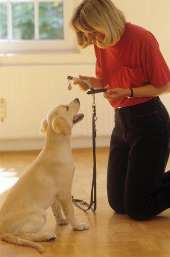 szkolenie psa w domu