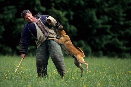 tresura psa obronnego