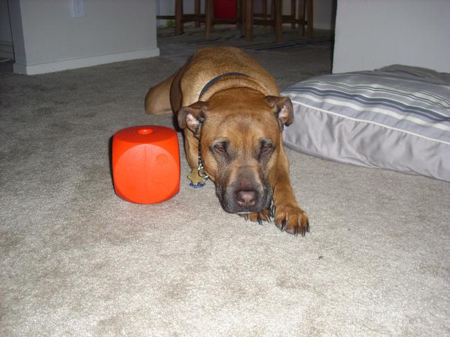 Buster cube inteligenta zabawka dla psa