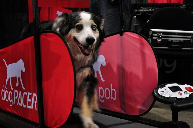 Opis zasady działania biezni dla psa