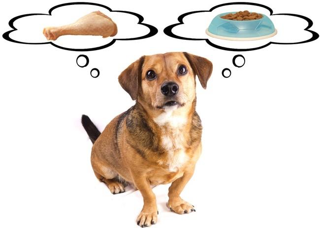 jak karmić psy w zimie
