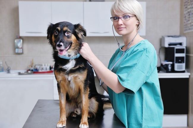 Хороший ветеринар для собаки