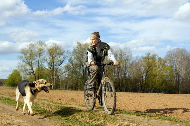 Jazda z psem przy rowerze