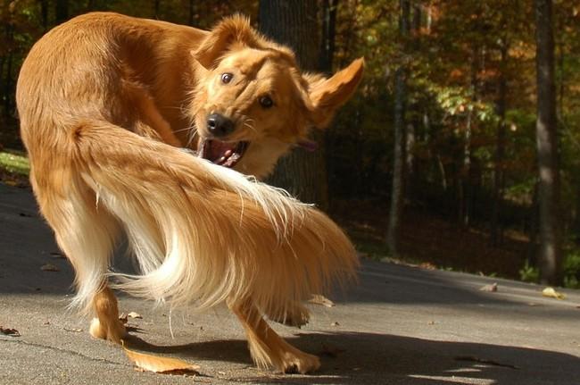 Pies gania własny ogon