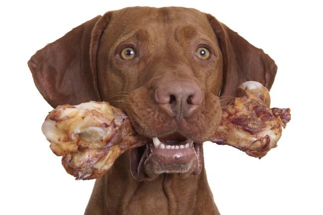pies i kość