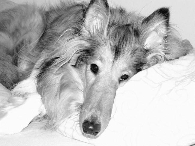 Opieka paliatywna i uśmiercanie psów