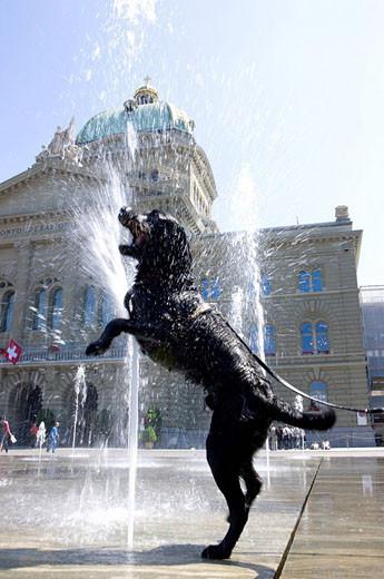 Parki dla psów w Warszawie Pies kapiacy się w fontannie