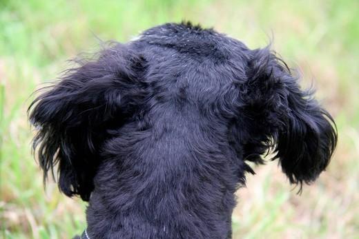 Zmysł słuchu u psa czyli uszy