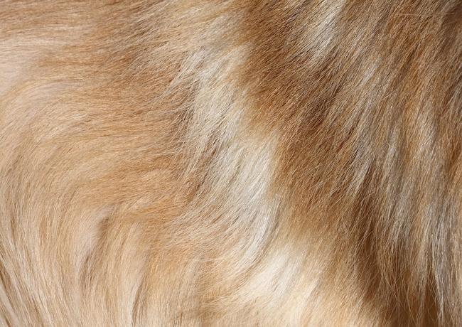 Jak dbać o skórę i sierść naszego psa
