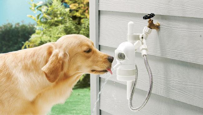 WaterDog poidło dla psów do ogródka
