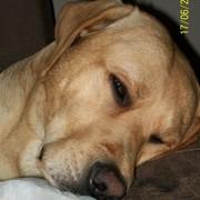 Fusinek śpi ;-)